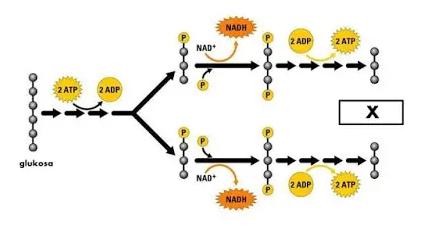 Metabolisasi-definisi-proses-fungsi-dan-tipe