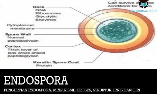pengertian-endospora